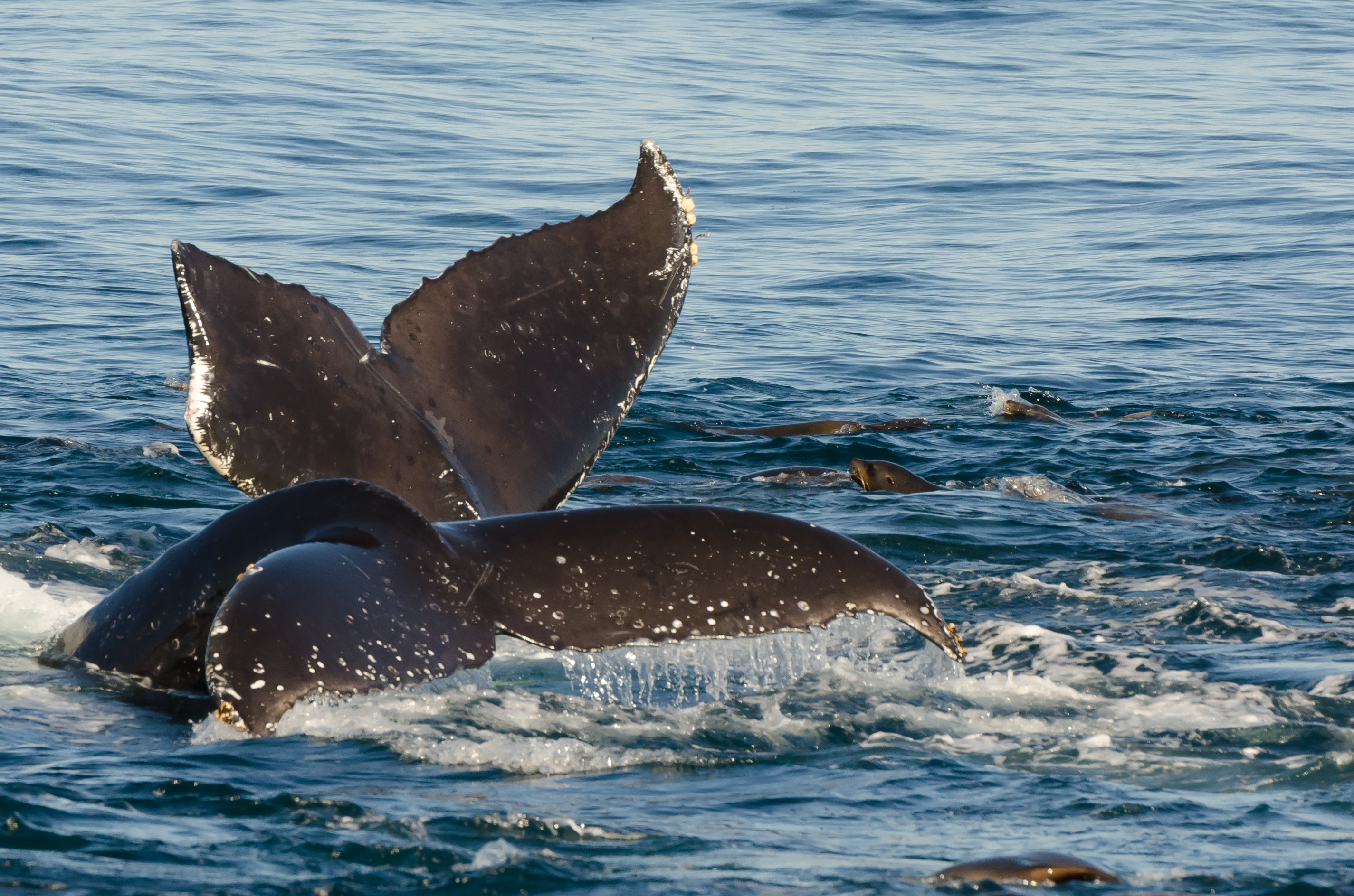 Best Whale Watching Tours In Boston Ma